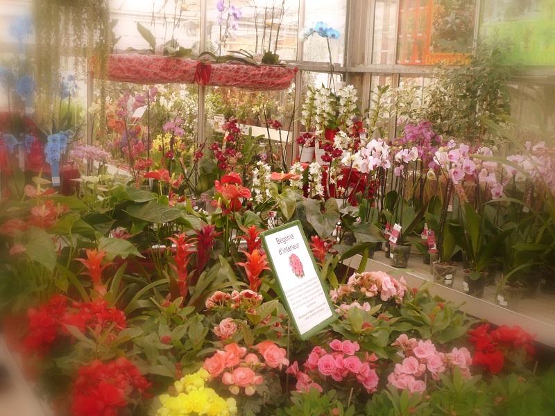 Plantes et Fleur d'intérieur